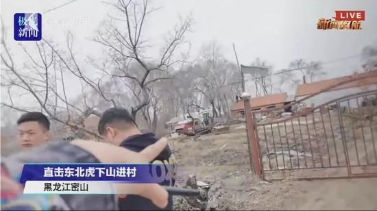 黑龙江进村东北虎还会被放归野外吗
